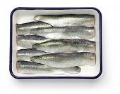 cooking process of pickled herring, sliced salted herrings on white enamel tray