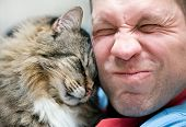 stock photo of encounter  - Striped siberian cat care with andult man - JPG