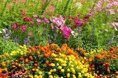 picture of manicured lawn  - Park in the beautiful flowers of many types - JPG