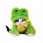 a cute kitten in a frog costume looking very mad