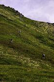 Alaskan hills