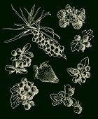 Illustration set of berries