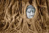 Stone Buddha Head In Tree Roots