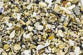 Seashells and pebbles, background