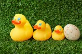 Family of toy ducks on grass