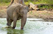Elephant in Udawalawe
