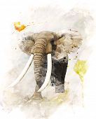 Watercolor Digital Painting Of   Walking Elephant