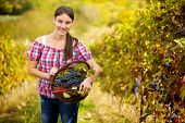 smiling young woman in vineyard with basket of grapes