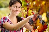 Smiling young woman picking grapes