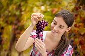 smiling female vintner inspecting grapes in the vineyard