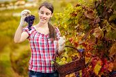 Cute women looking bunch grape and enjoy the products of her vineyards