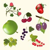 Berries and fruits isolated on white set.
