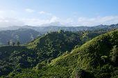 Lush Kauai