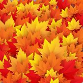 autumn leaves texture - vector abstract background