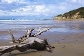 foto of driftwood  - A large piece of driftwood on a beach in New South Wales - JPG
