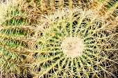 stock photo of spiky plants  - Macro Close up of Green Spiky Cacti - JPG