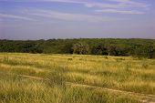 Texas Lanscape