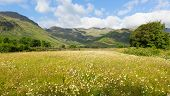 stock photo of dungeon  - Daisy field with mountains blue sky and clouds scenic Langdale Valley Lake District Cumbria near Old Dungeon Ghyll England UK in summer - JPG