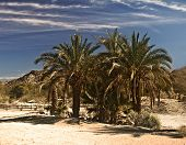 Oasis in the Mojave Desert of California