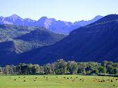Cattle Ranch In San Juans