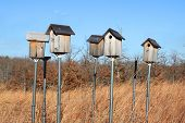 Birdhouses on a large field with tall grass