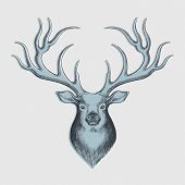 deer drawing - perfect for christmas designs - hand drawn with graphics tablet