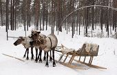Reindeer  And Sled.
