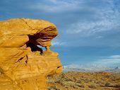 Desert Sentinal