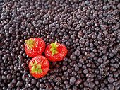 Bilberries (Vaccinium myrtillus) in the market