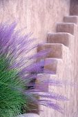 stock photo of tall grass  - Purple and green tall grasses fronting an adobe wall in Santa Fe NM - JPG