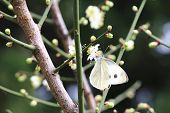 Plum flower and butterfly