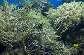 Corals And Tomato Clownfish  (amphiprion Clarkii)