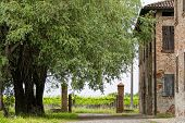 foto of farmhouse  - Old farmhouse in Italy with wineyard on background - JPG