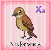 A letter X for xenops