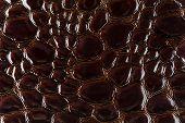 Brown Snake Skin Background