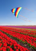 Kite flying over beautiful red tulips during day