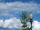 Light Post And Pine Tree