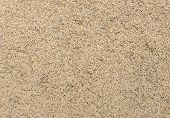Paddy Rice Seed Background