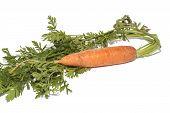 Fresh bio carrot isolated over white