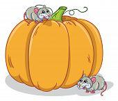 Rats And Pumpkin