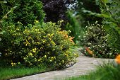 beautiful summer garden view with stone pathway, colorful blooming flowers and bush