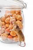 House Mouse Near Walnut And Corn Jar