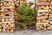 Beechen Firewood