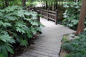 Wooden walkway winding in park
