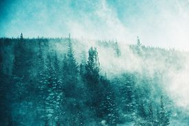 stock photo of snow forest  - The Winter Storm - JPG