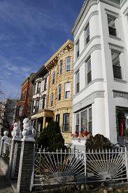 picture of brownstone  - New York City brownstones in Bedford Stuyvesant neighborhood in Brooklyn - JPG