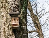 picture of nesting box  - Nest box on a tree in a public park forest - JPG