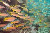stock photo of shoal fish  - Underwater photography of a shoal of fish - JPG