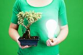 foto of bonsai  - holding bonsai tree and light bulb Environment ecology and sustainable resources concepts - JPG
