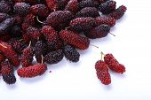 stock photo of mulberry  - red and purple mulberry fruit isolated on white background - JPG